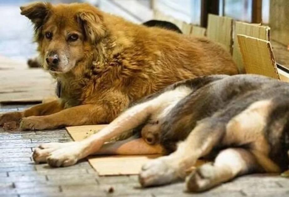 В Петербурге все больше бездомных животных, а Беглову пофиг