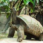 Image for the Tweet beginning: Fallece la tortuga gigante Schurli.