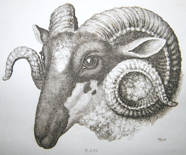 Today is quintidi 5 Thermidor in the year of the Republic CCXXIX, celebrating the ram. https://t.co/d32zbwUz2T