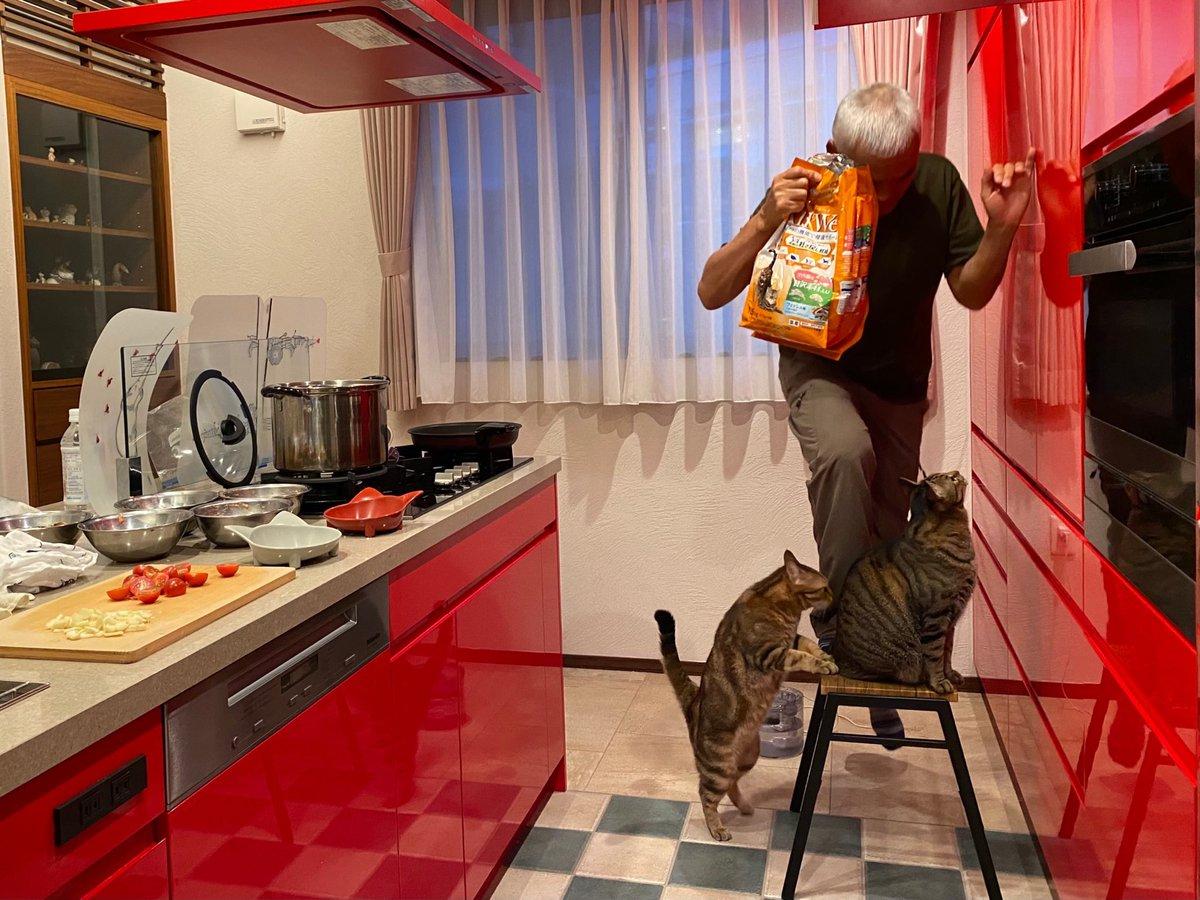 ヒトのご飯よりネコのご飯。どんなに忙しくても、タマトモのご飯の時間は厳守です。力作のサラダ、一人一皿出したら、多過ぎると家族に苦笑いされる。食事作りのごほうびはアイス。あれっトモ、手伝っていないよね?(匂い確認のみ。笑)