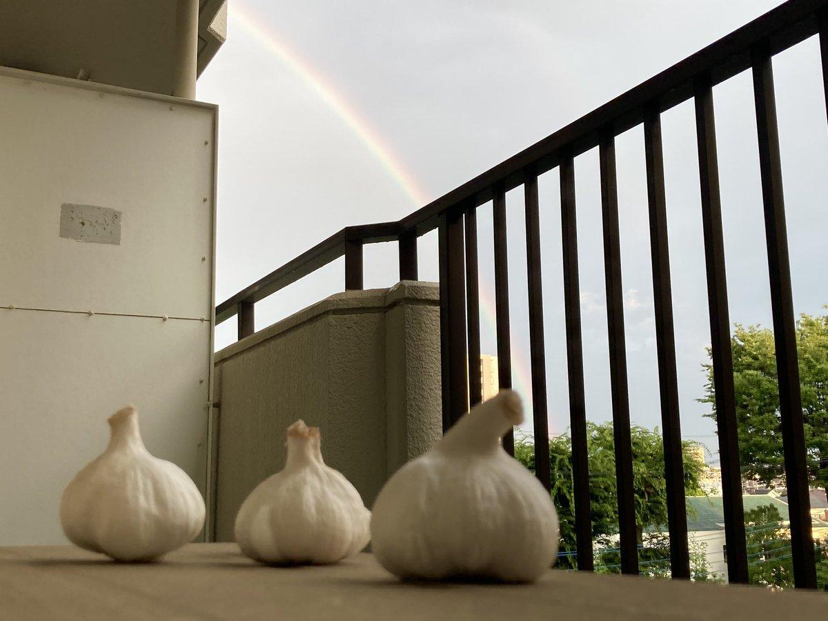 にんにく達が、虹を眺めている素材が欲しくなったら使ってください