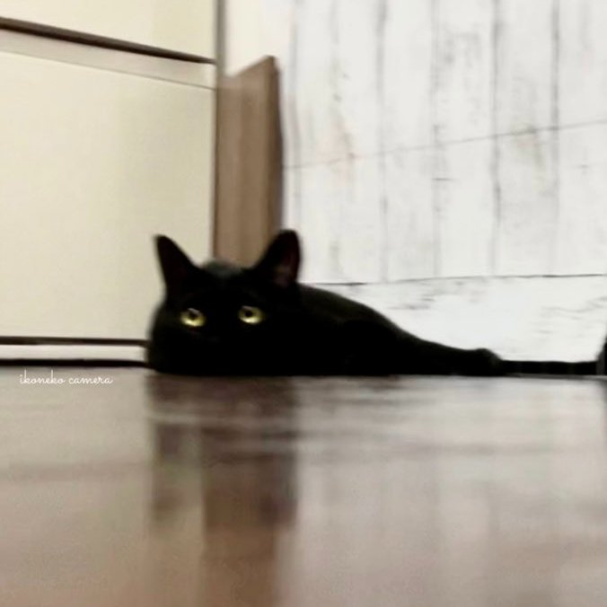 溶けていく黒猫をフィギュアにしてみました。  より妖怪感が増してしまいました。