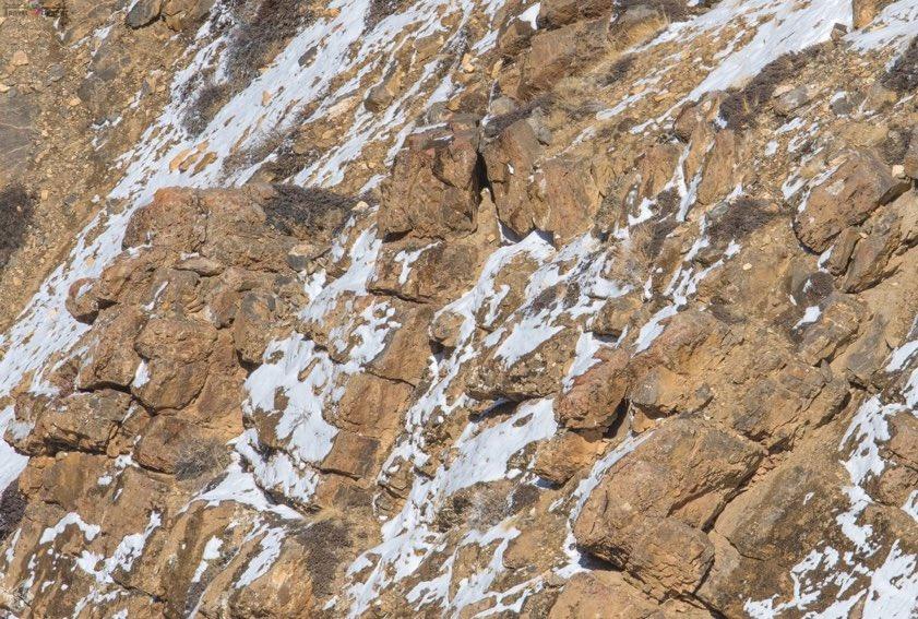 Can you locate the snow leopard here? #DekhoApnaDesh   @rameshpandeyifs @ryancragun