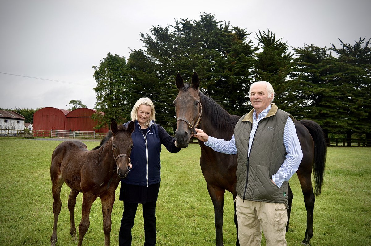 Snow Fairy is looking great guys, we'll done Neil and all the team at #SimmonstownStud  Looking forward to the @Juddmontefarm Irish Oaks @curraghrace this weekend.  #irishracing #TheWinningConnecrion