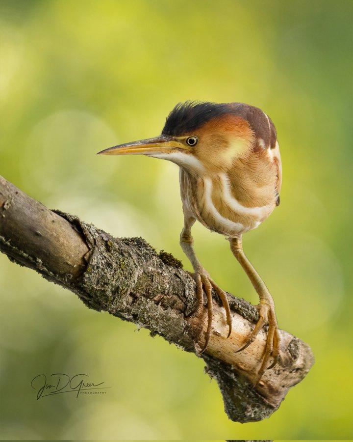 ImageWenn ein Vogel verärgert ist