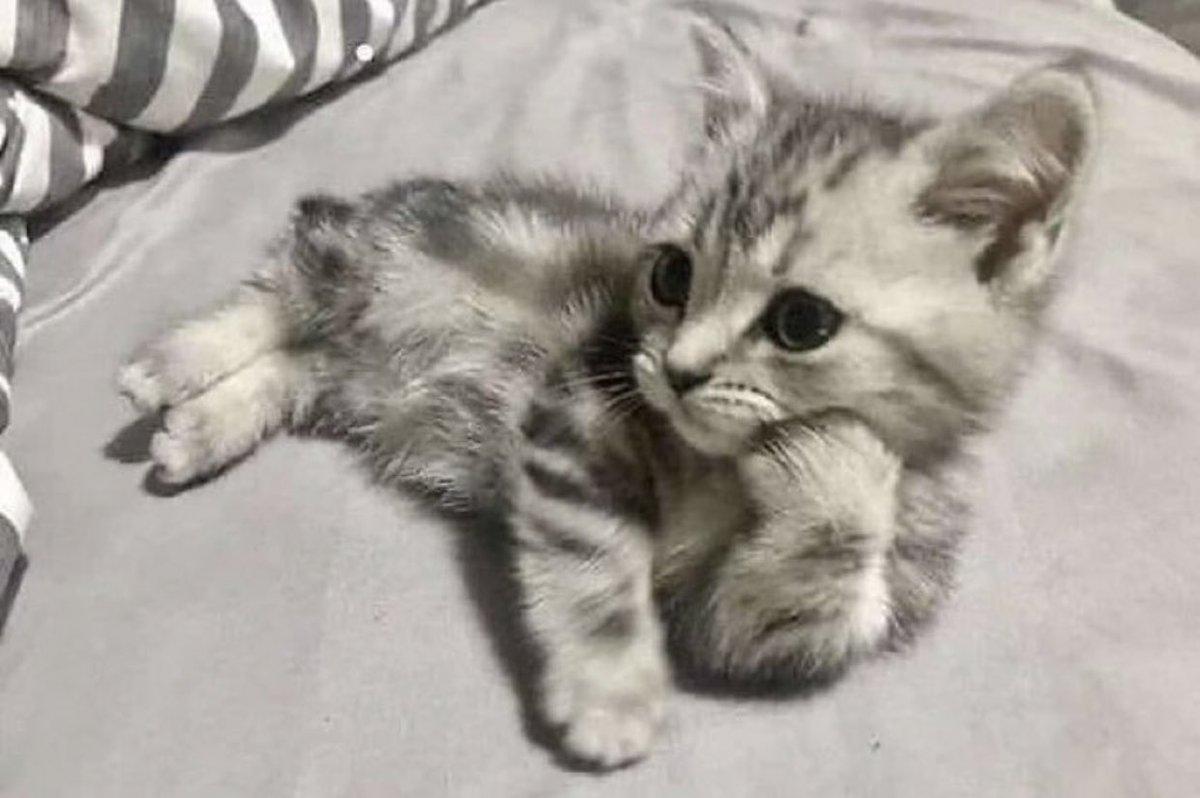 めちゃくちゃ話を聞いてくれそうな猫