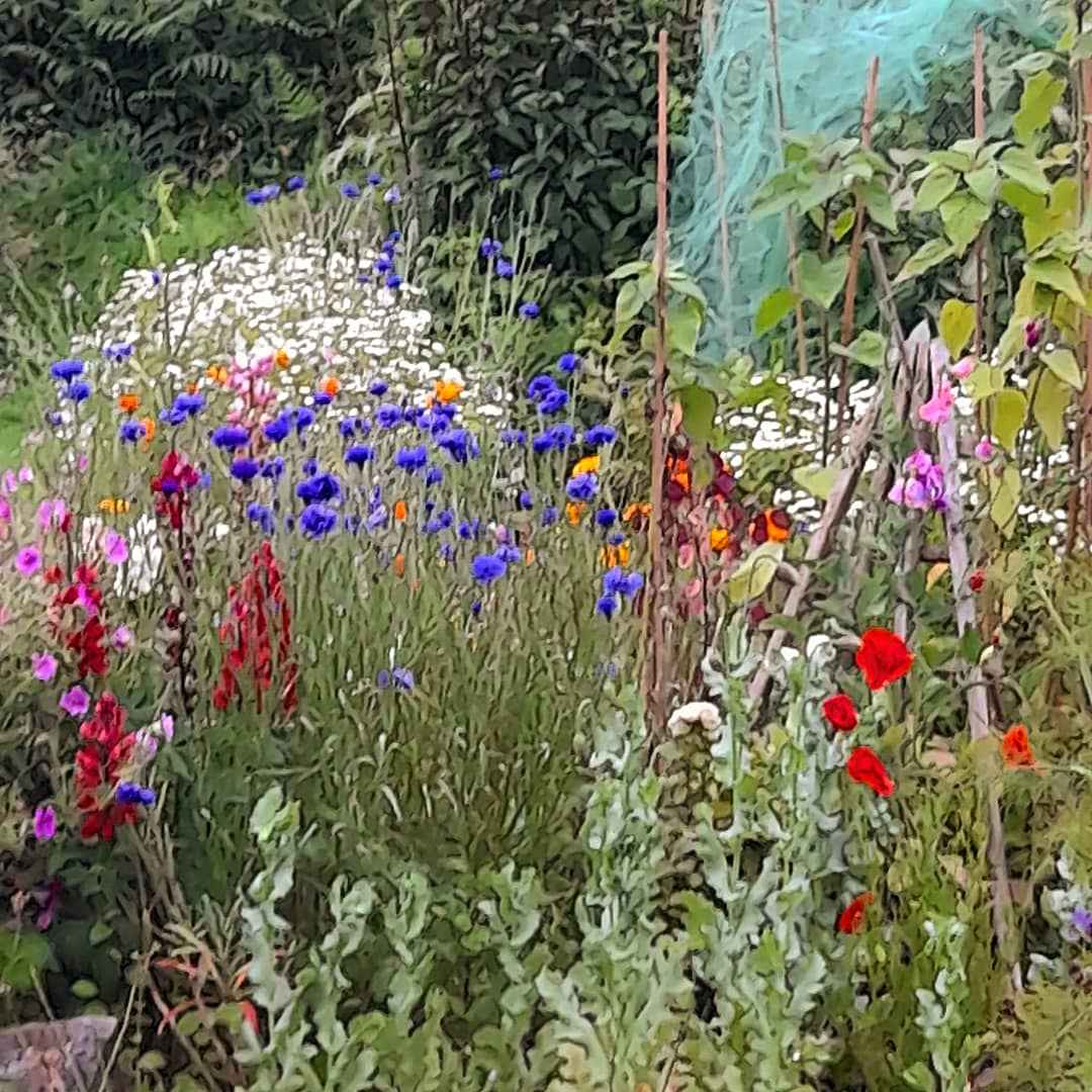 True to its name, all plants in the Medicinal Herb Garden in @ballydehobcc  have medicinal actions, & many are also edible.  Open Thursdays & Fridays to 13 August.  P81 XK13.  https://t.co/TcBAcBJDzE @Corkcoco  @pure_cork  #purecorkwelcomes #westcorkgardentrail @visitbantry1 https://t.co/JZuVGvUdOF