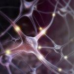 Image for the Tweet beginning: Descubren a las neuronas que