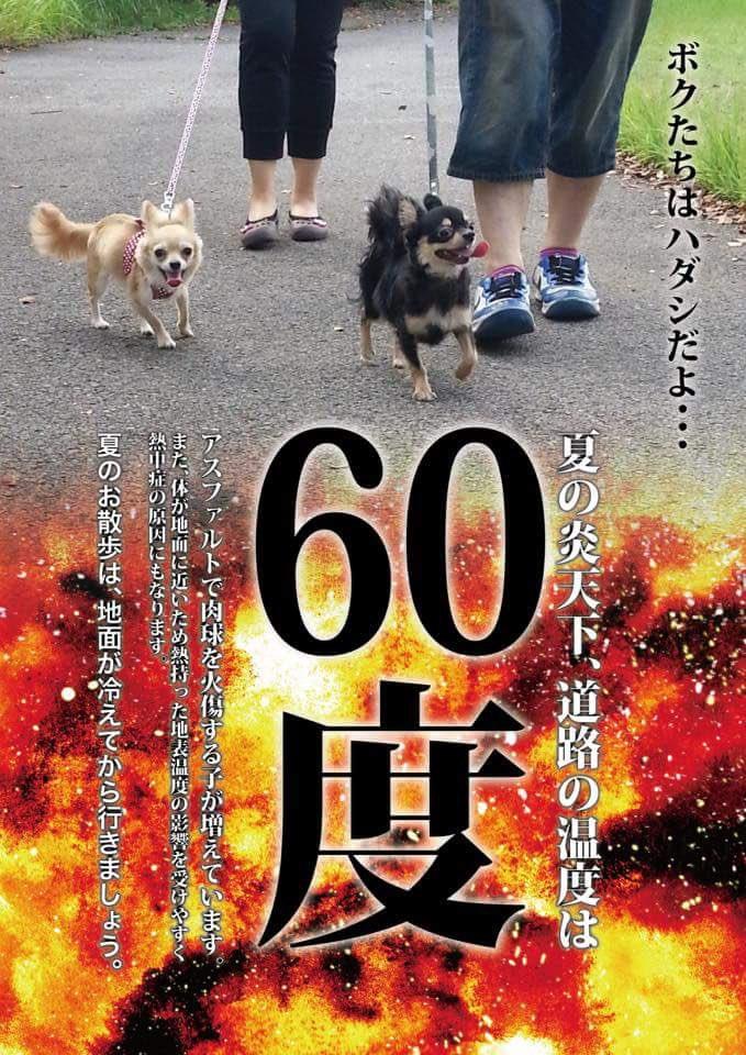 本格的な夏を迎える前に犬の散歩に関してACのCMかなんかで注意喚起して欲しい。気温に関係なく時間で散歩する人がいるから。炎天下散歩してる人を見ると「アスファルト触ってみろ!」と怒鳴りたくなる。