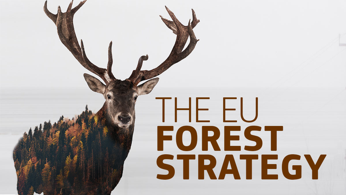 Forests play a vital role in our societies- and reading the new #EUForestStrategy 2030 is a must for anyone interested in climate & biodiversity issues. The #EUGreenDeal is slowly becoming a reality, one policy (and one tree🌲) at a time. #Fitfor55 #ClimateNeutralEU 🌲🌳🌲