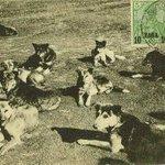 Image for the Tweet beginning: Tam 111 yıl önce #Hayırsızada'da