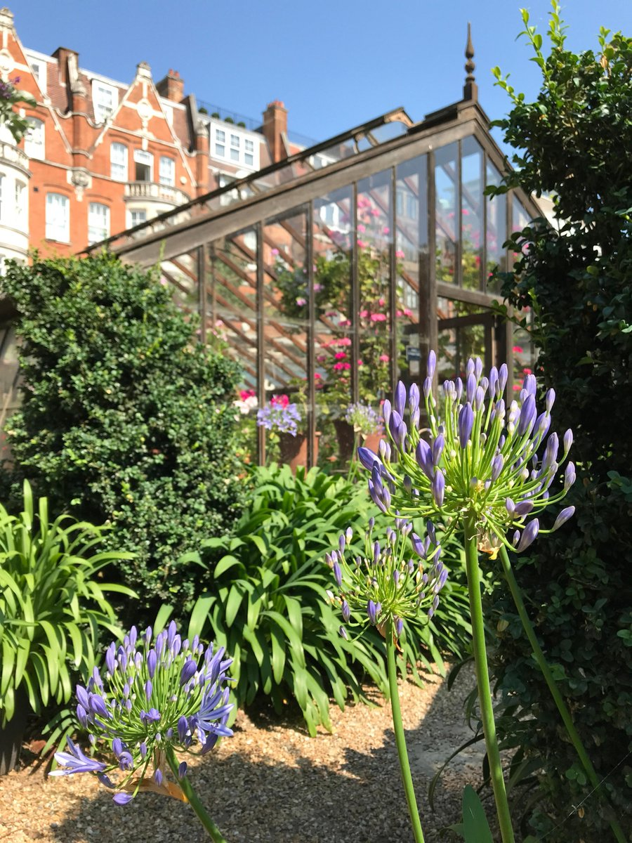 Become a Friend of Chelsea Physic Garden this Summer. Enjoy free entry for a year and start exploring our hidden botanical oasis in central London. Sign up online: ow.ly/MoWZ50FChtV #botanicgarden #garden #plants #botanicgarden #nature #London #Chelsea