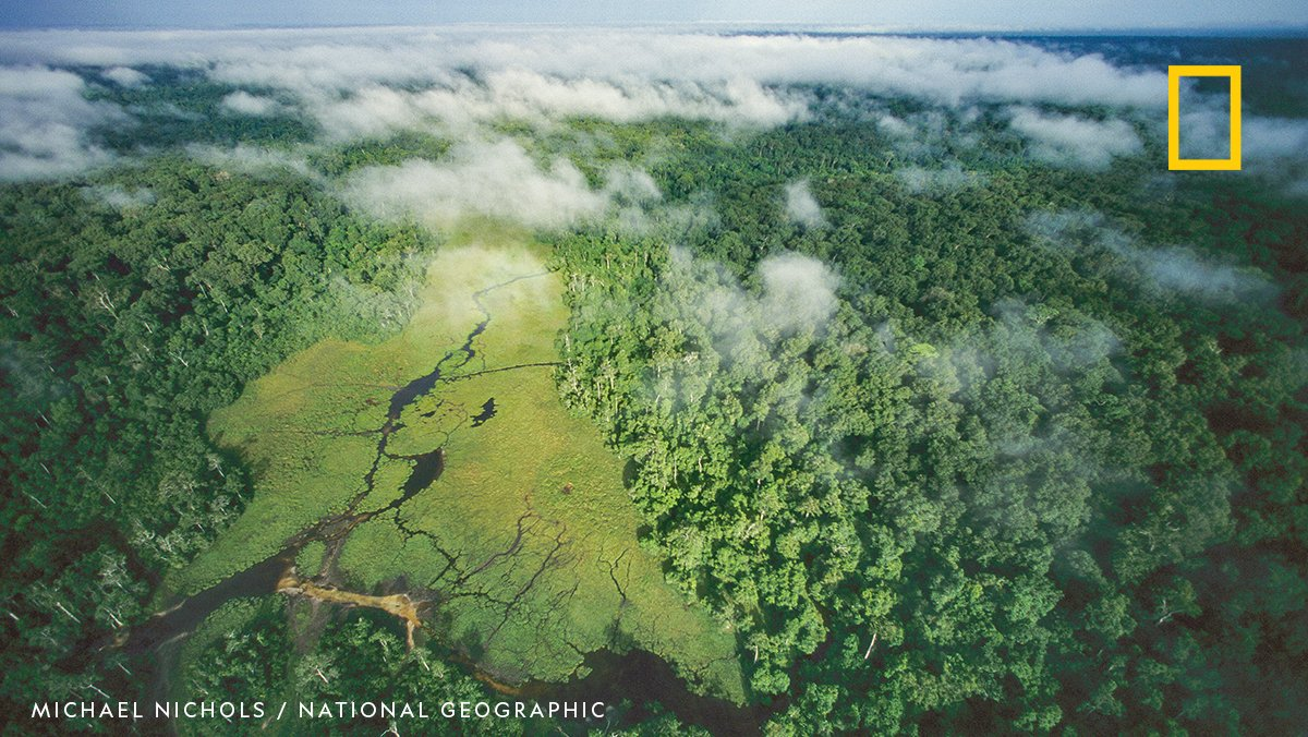 BREAKING: The National Geographic Society, with the support of @Rolex #PerpetualPlanet initiative, convened leading scientists and conservationists to create a new tropical rainforest vulnerability index (TFVI). https://t.co/Cb2qR85LaT