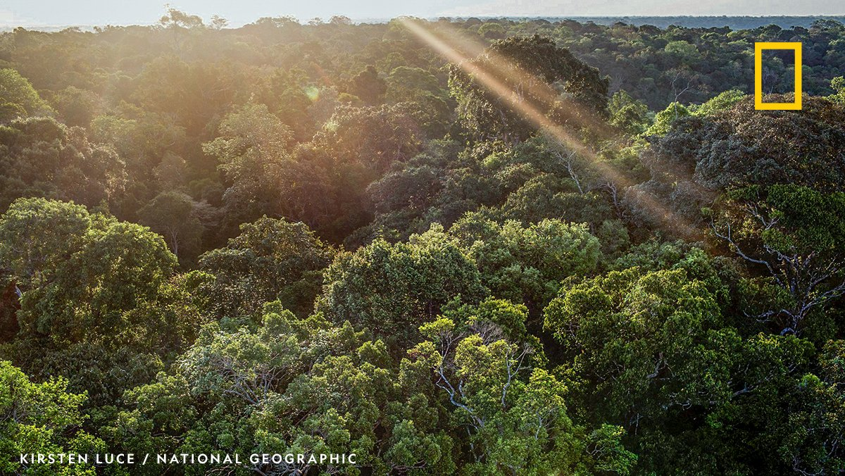 According to a recent study published in @OneEarth_CP, rainforests on different continents have distinctive responses to environmental pressures. https://t.co/cOC3w2ZRWL