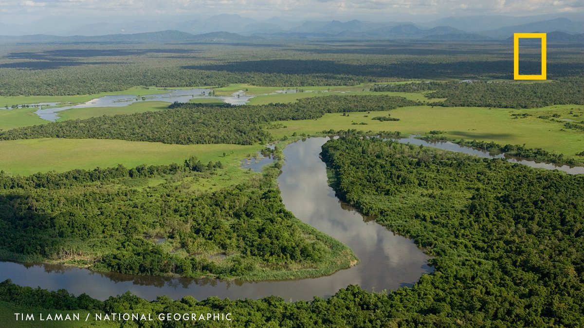 Though both humid tropical forests, the Amazon and Congo Basin respond differently to dry atmospheric conditions - the Amazon shows large-scale vulnerability while the Congo Basin shows signs of resilience. https://t.co/MfuI40UIJc
