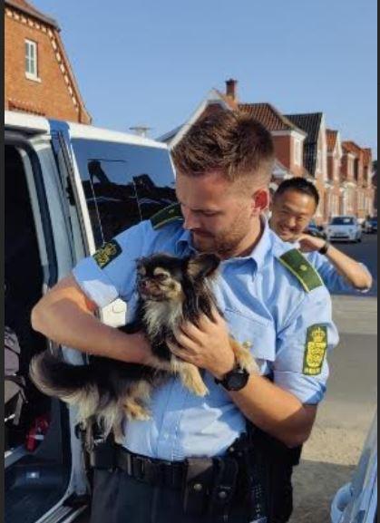 I Kerteminde på Langegade her kl. 1815 har vi fundet denne lille hund på vedhæftede foto. Er det din eller kender du ejeren, så kontakt venligst Fyns Politi på 1-1-4 #politidk https://t.co/cKjxb31Hk7