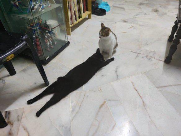 猫の黒い影の正体は?!実は、、、。