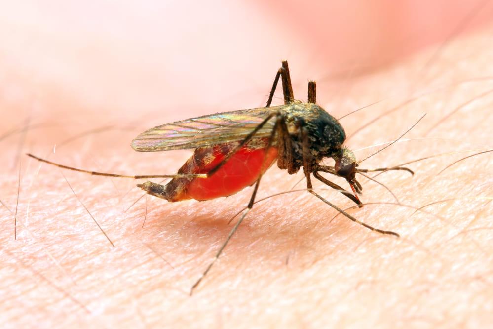 これぞ科学⁉蚊の吸った血からDNA判定で犯人逮捕に成功⁉