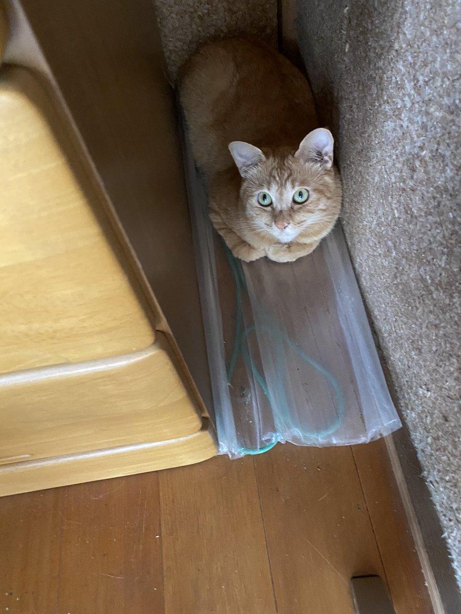 やる気が出ないと貼られている階段に?体を使って表している猫!