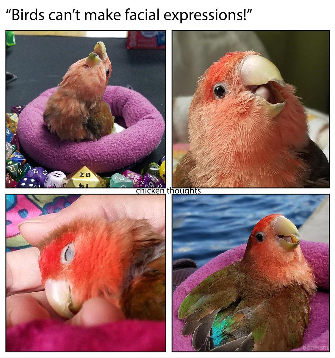 @birdhism's photo on Comfort