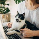 Image for the Tweet beginning: Dünyanın her yerinden kedi ebeveynlerinin