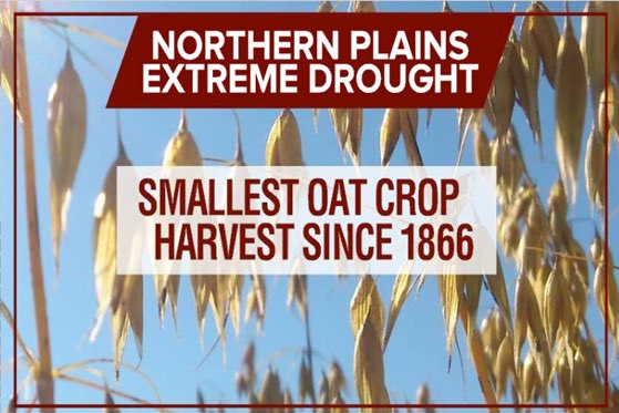 Drought and now heat taking its toll. Worst oat harvest likely on record. https://t.co/SjJQWT1U94
