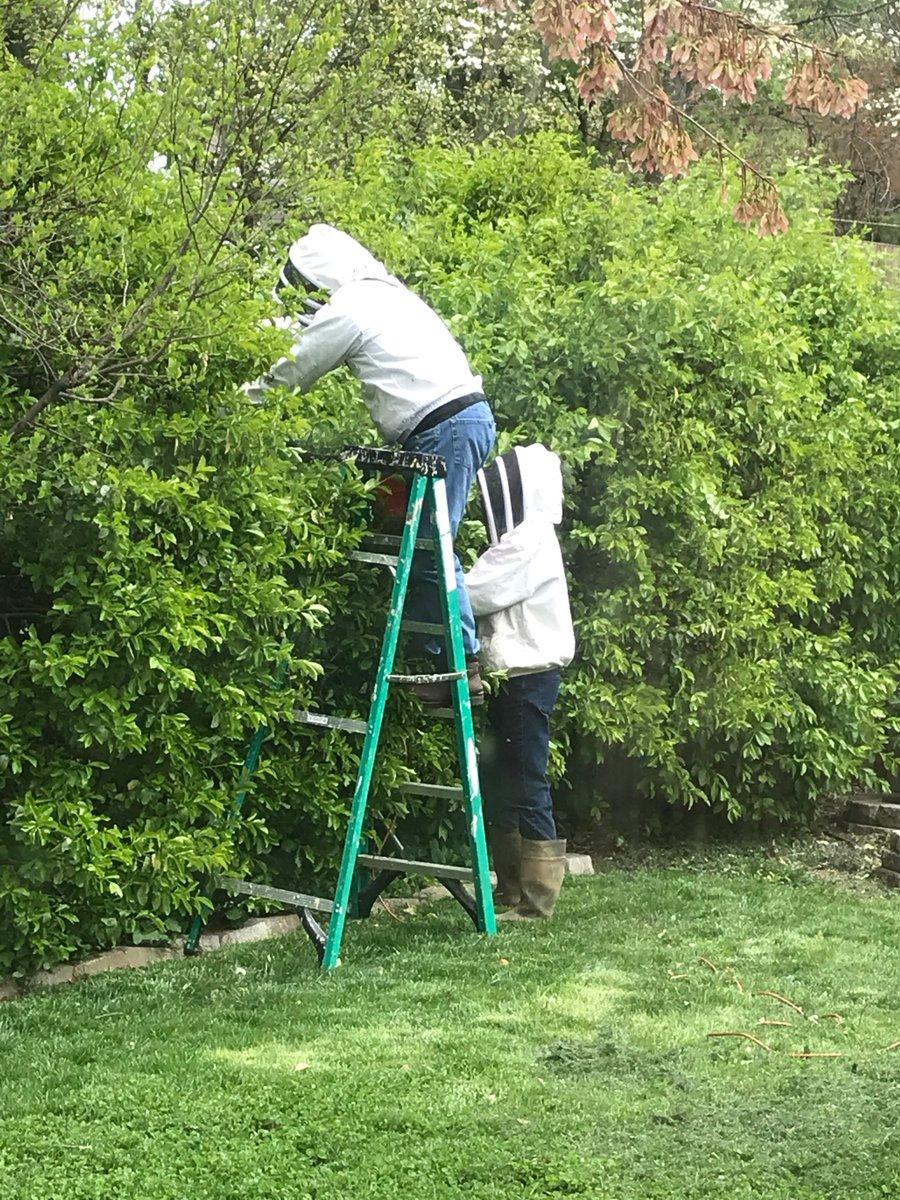 家にミツバチが住み着いてしまったら養蜂家を呼ぼう!女王蜂入りコロニーは貴重です!