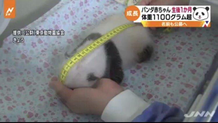 パンダの赤ちゃんに巻尺めりこませながら身長をはかる名誉職につきたい