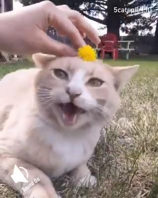 Everybody says meow 🔊  📹 5catspie | IG https://t.co/VNzv4RPfCC