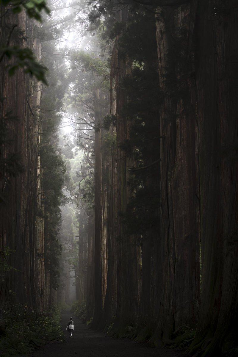 長野県にある戸隠神社の参道が巨大樹の森のよう。