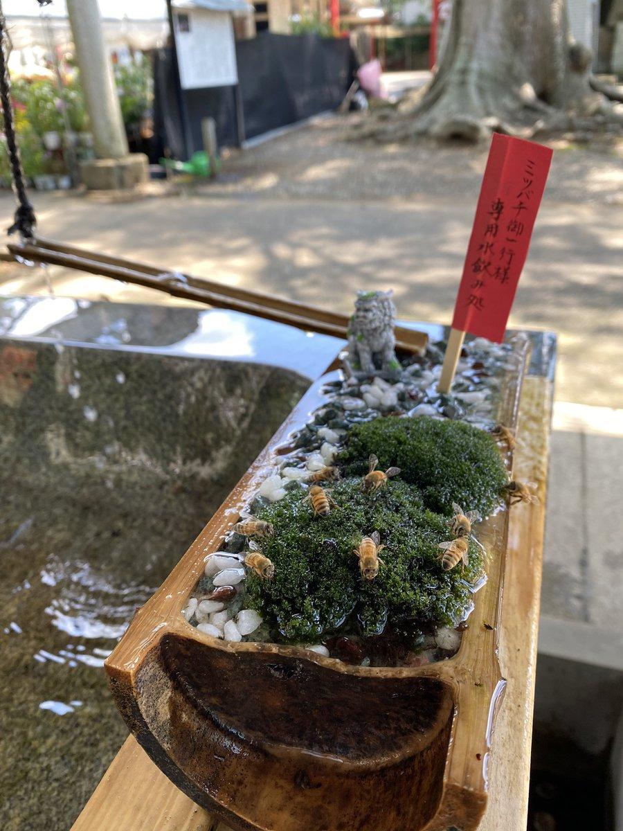 ミツバチ専用水飲み場!?見かけた場合は刺激せず暖かく見守ってね!