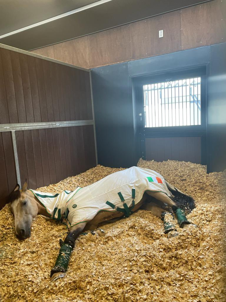 We all need a little timeout sometimes 👌🏼   Tullabeg Flamenco resting up after a long trip to #tokyo2020 🗼  Sam Watson and Tullabeg Flamenco competing in Eventing which starts next week #teamireland ☘️ https://t.co/Y8UJNr2r42
