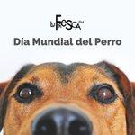 Image for the Tweet beginning: Dia Mundial de… El amigo del