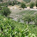 Image for the Tweet beginning: #Turismo #Gastronomia #Andalucia.- El #vino