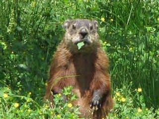 RT @GroundhogDayy: Punxsutawney Phil says: 183 days until #GroundhogDay! It's Tuesday, August 03 2021.  #summer 🌞 https://t.co/ze8DfMqSgj