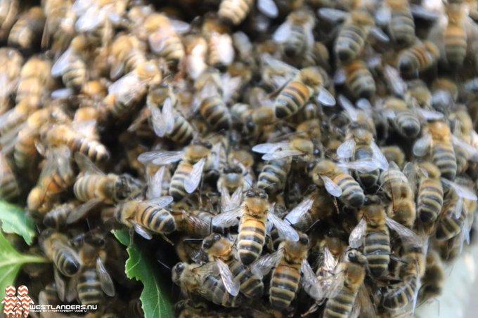 Wederom Amerikaanse Vuilbroed bij bijen vastgesteld https://t.co/jzWbU4QkSc https://t.co/W7ofwV1RTe