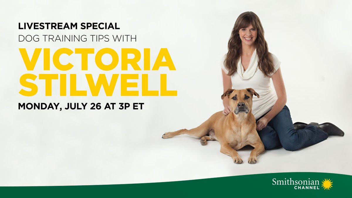 World-renowned dog trainer, @VictoriaS is hosting a Facebook Live Q&A this Monday at 3 PM to answer all your pandemic puppy questions.   Dog lovers: you don't want to miss this! #DogsWithJobs https://t.co/oUjhHpgmFo