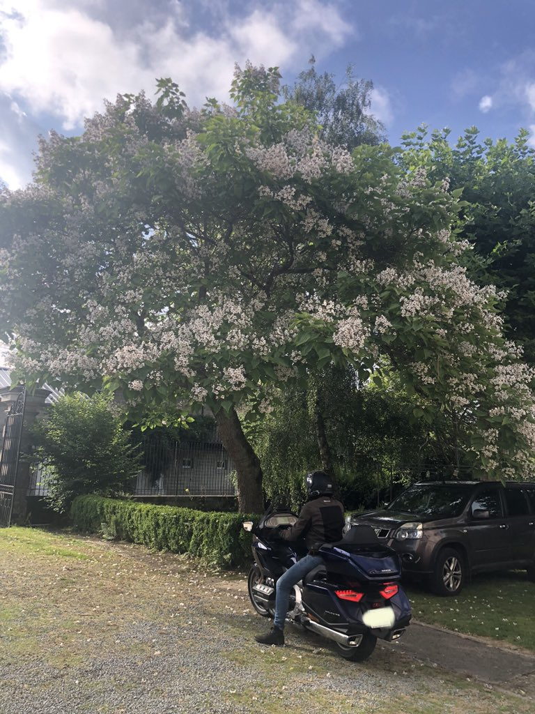 One of guests just leaving on his Honda Goldwing @rideandrest #cetetejevisitelafrance @chateaudiy #lacreuse #France #Limousin #Chateauonashoestring #cottagecore https://t.co/9ojV7r6FWQ