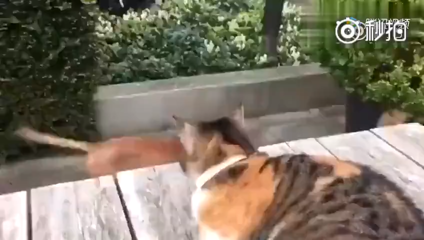 This cat and dog are friends, the neighbor's cat came for a visit and bullied the dog. The cat was not having any of it.   #Cats #Cat #Kittens #Kitten #Kitty #Pets #Pet #Meow #Moe #CuteCats #CuteCat #CuteKittens #CuteKitten #MeowMoe    https://t.co/p5jUWeh8O3 https://t.co/qa1at6U6fX