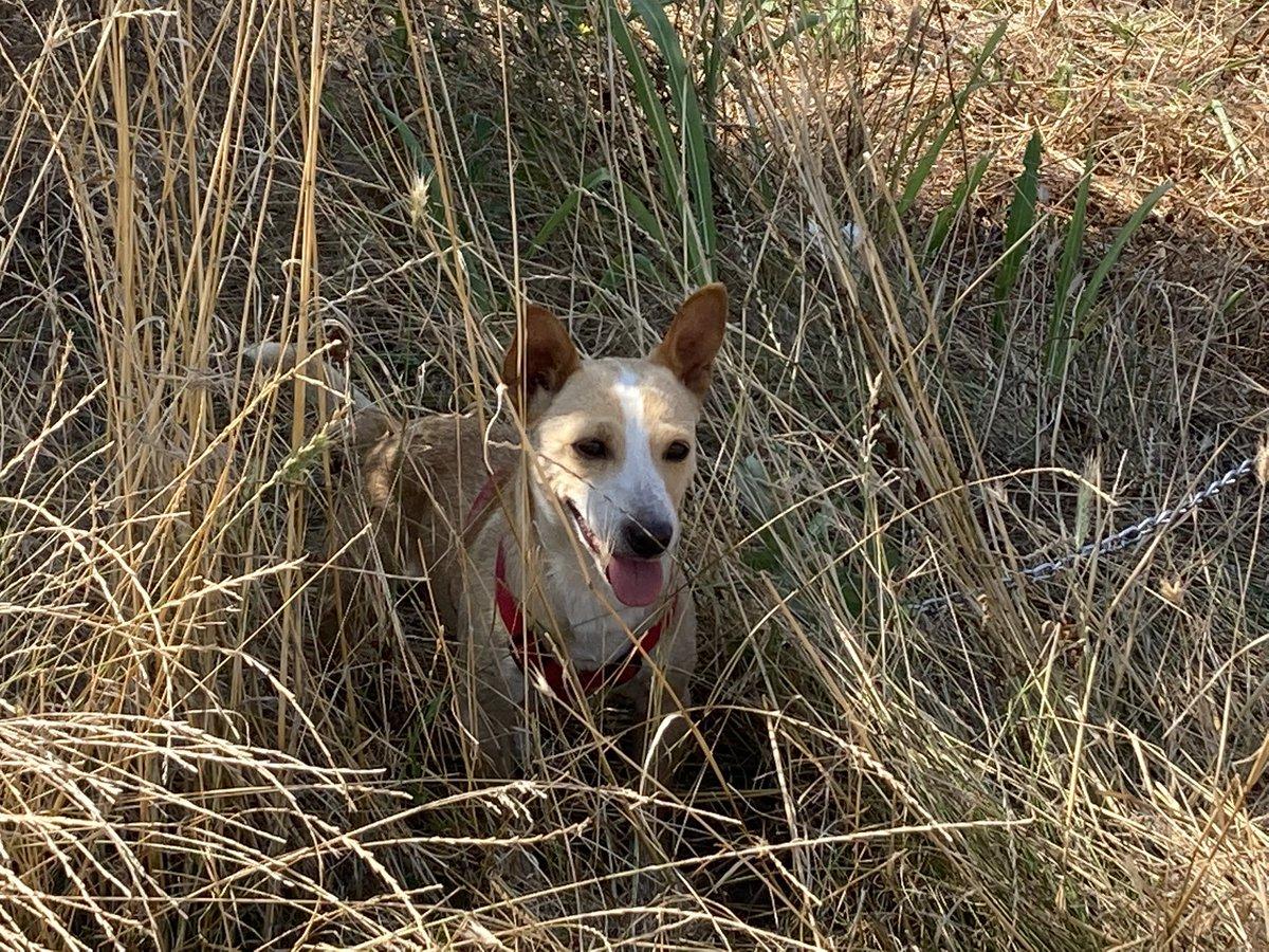 Good morning #Shorty #dogsoftwitter #dog #pets #Saturday #ThePhotoHour https://t.co/B5pxXyTk5y