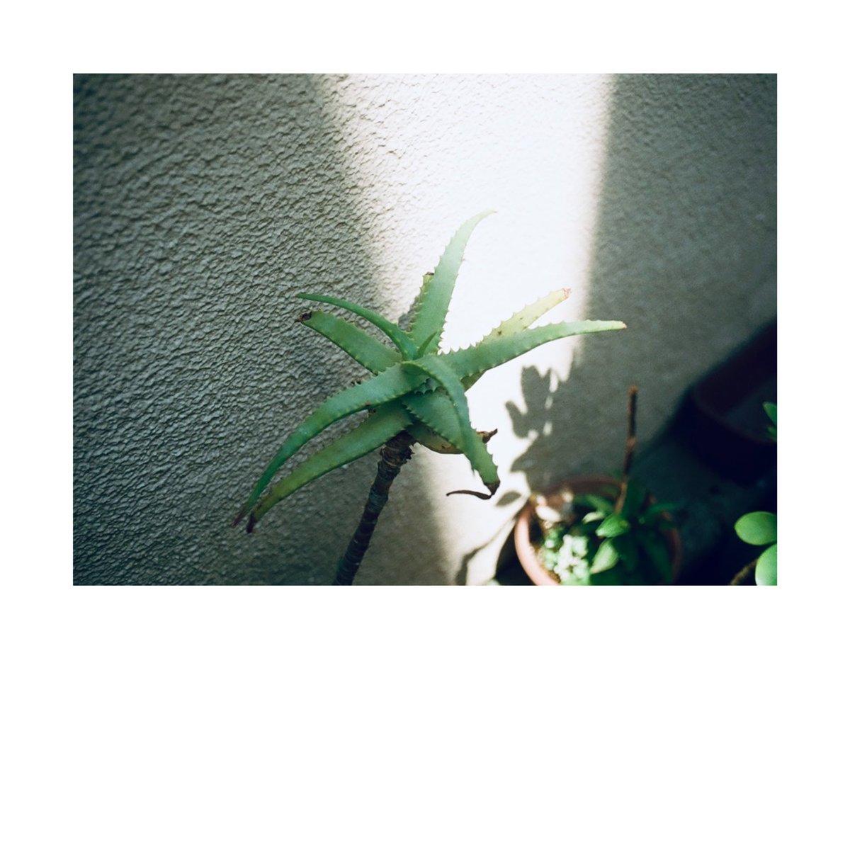 『  ハミングの街  』  film photography #photography #photo  #写真  #写真撮ってる人と繫がりたい #写真好きな人と繋がりたい #ファインダー越しの私の世界 #キリトリセカイ #東京カメラ部 #生活とフィルム #フィルムカメラ #filmcamera #フィルム写真 https://t.co/4eiinAizHK