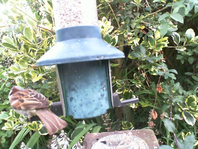 Live WEBCAM:Cam2 Birdfeedercam Carlisle UK #Bigdata #Industry4 #Bird #Springwatch  #IOT  #Birdphotography #Naturephotography #Nature https://t.co/q48rHfrzUH 24/07/2021 06:03:33 https://t.co/a9dAGRDjYC