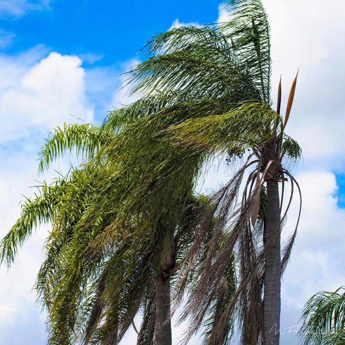 #ruleofthirds #photography #macrophotography #naturephotography #Nature #CloseUp #Outdoors #TropicalClimate https://t.co/nugU9nzoOH
