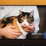 テレビ朝日の「建もの探訪」に出てきた猫が可愛い!名前は「おねえちゃん」w