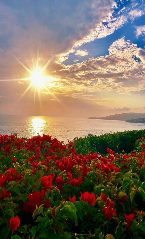 Good morning friends.  #nature #naturePhotography https://t.co/VFgPatF83U
