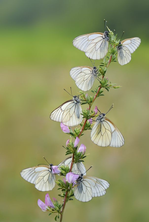 Beauty of nature.🦋🦋❤️❤️ #butterfly #NaturePhotography https://t.co/BtU8VmEI7R