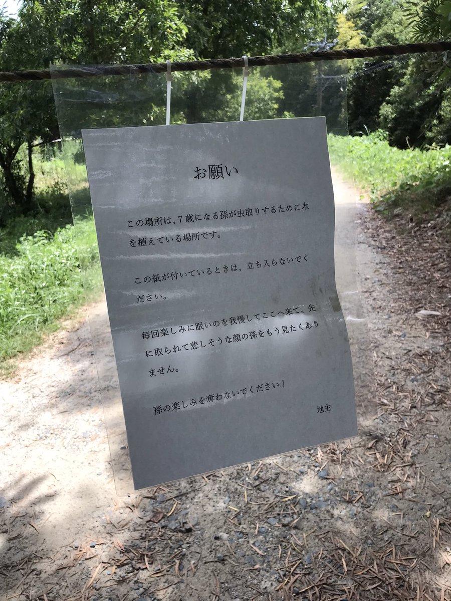 丸山宗利 Maruyamaさんの投稿画像