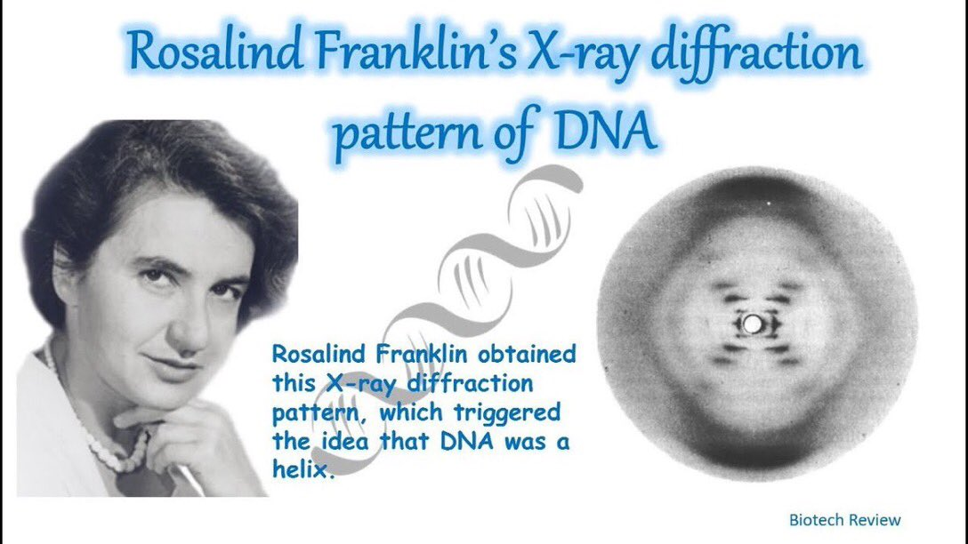 25.7.1920 Born #OTD English chemist & X-ray crystallographer Rosalind Franklin. Her X-ray diffraction pattern of #DNA suggesting it was a double helix is considered the major contributor in its discovery #STEM #WomenInSTEM #WomenScientists #HiddenWomen #WomensHistory https://t.co/BwuodYSbSc