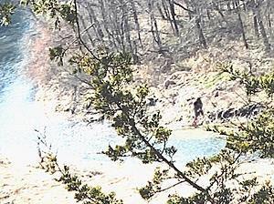 'Bigfoot' photographed in Bernard, Iowa E7KUaRPWQAUq3rm?format=jpg&name=360x360