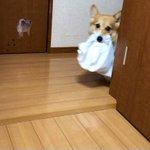 お母さんを助けてくれるお手伝い犬!